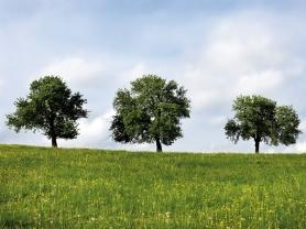 dreischoenheiten sommer